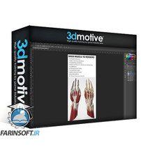 دانلود 3DMotive Hand Anatomy in Zbrush