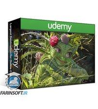 دانلود Udemy CreatureArtTeacher – Hidden Creatures of the Forest