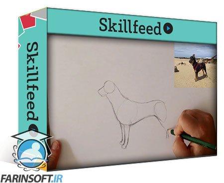 دانلود Skillshare Drawing Dogs: Basic Techniques to Improve Your Canine Illustrations