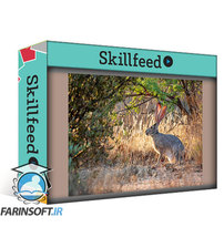 دانلود Skillshare Wildlife Photography How to Take Captivating Animal Portraits
