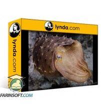 دانلود آموزش Lynda Underwater Photography: Wide Angle