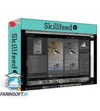 آموزش SkillFeed Wildlife Photography Essentials