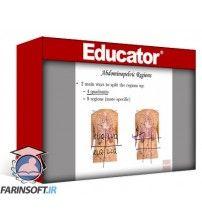آموزش Educator Anatomy and Physiology